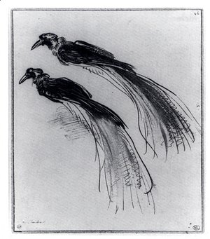 Two Studies Of A Bird Of Paradise