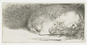 Rembrandt - A sleeping Puppy